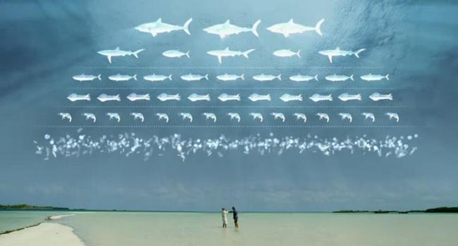 Et si le requin disparaissait ?
