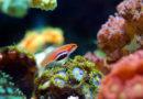 [Guyane] Le récif corallien de l'Amazone est-il menacé ?