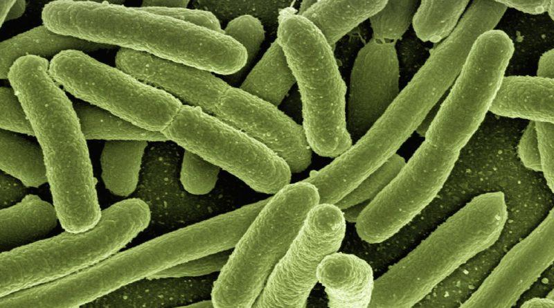 L'épidémie de choléra au Nigéria risque de se propager au Cameroun